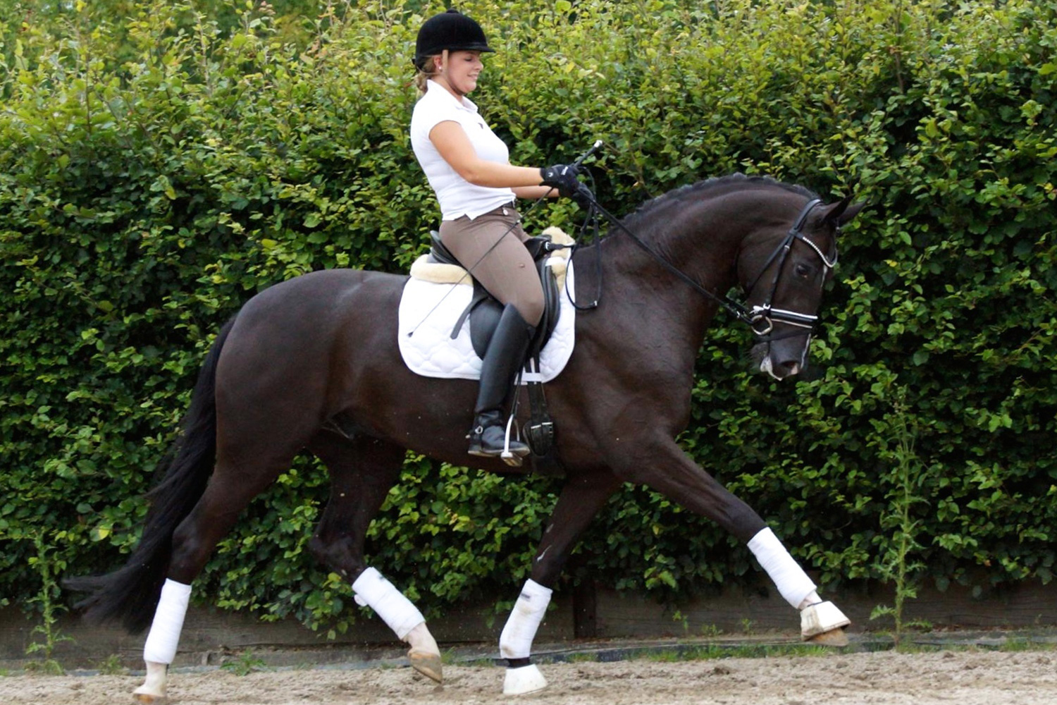 007-heritage-farm-sport-horse-sale-warmblood-sotto-voce-de-niro